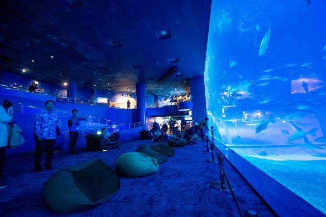 沖縄美ら海水族館~ナイトアクアリウム~ ・夜のDINO恐竜PARKコース