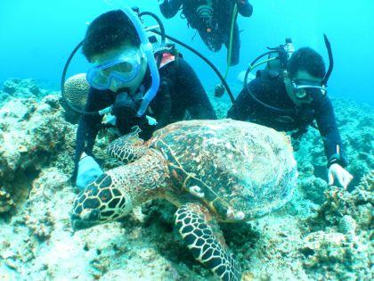 ホエールウォッチング&ケラマ諸島 体験ダイビング&スノーケリング