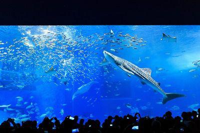 ◎夏季限定◎ 直行!沖縄美ら海水族館5時間大満喫コース