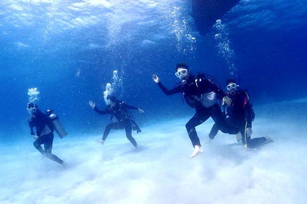 [石垣島]お気軽体験ダイビング!キレイなサンゴ礁やお魚がお出迎え♪ 石垣島体験ダイビング(1Day)ランチ付き