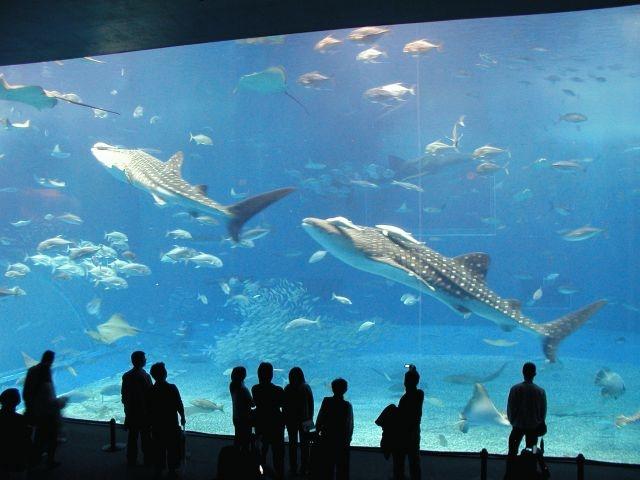 <本部発>沖縄に来たらまずはここ!北部定番人気観光コース
