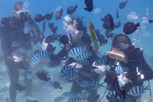 【ピンクマーリンクラブ】青の洞窟ボート体験ダイビング