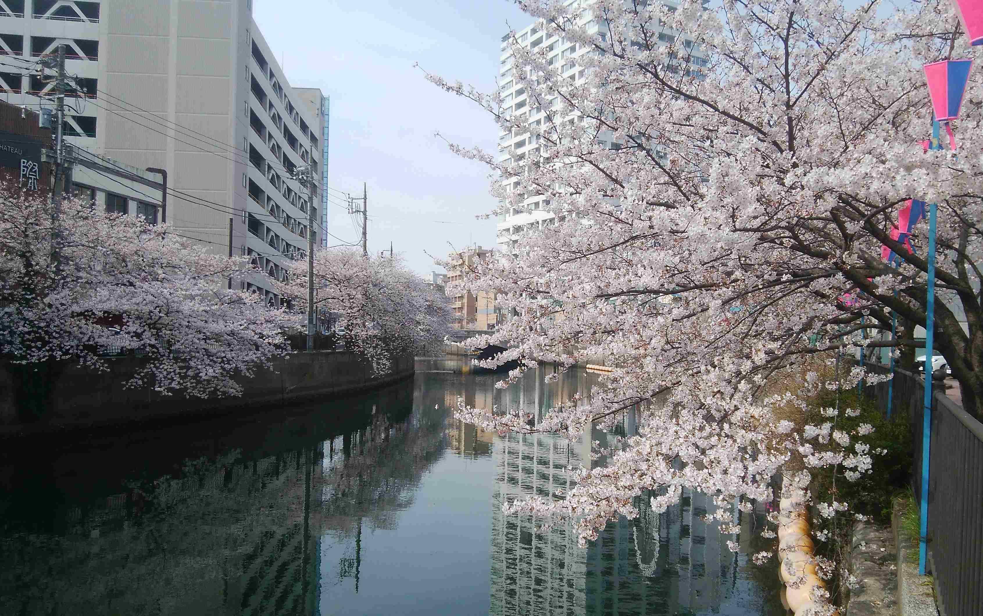 横浜みなとみらい桜お花見クルージング★安...の写真