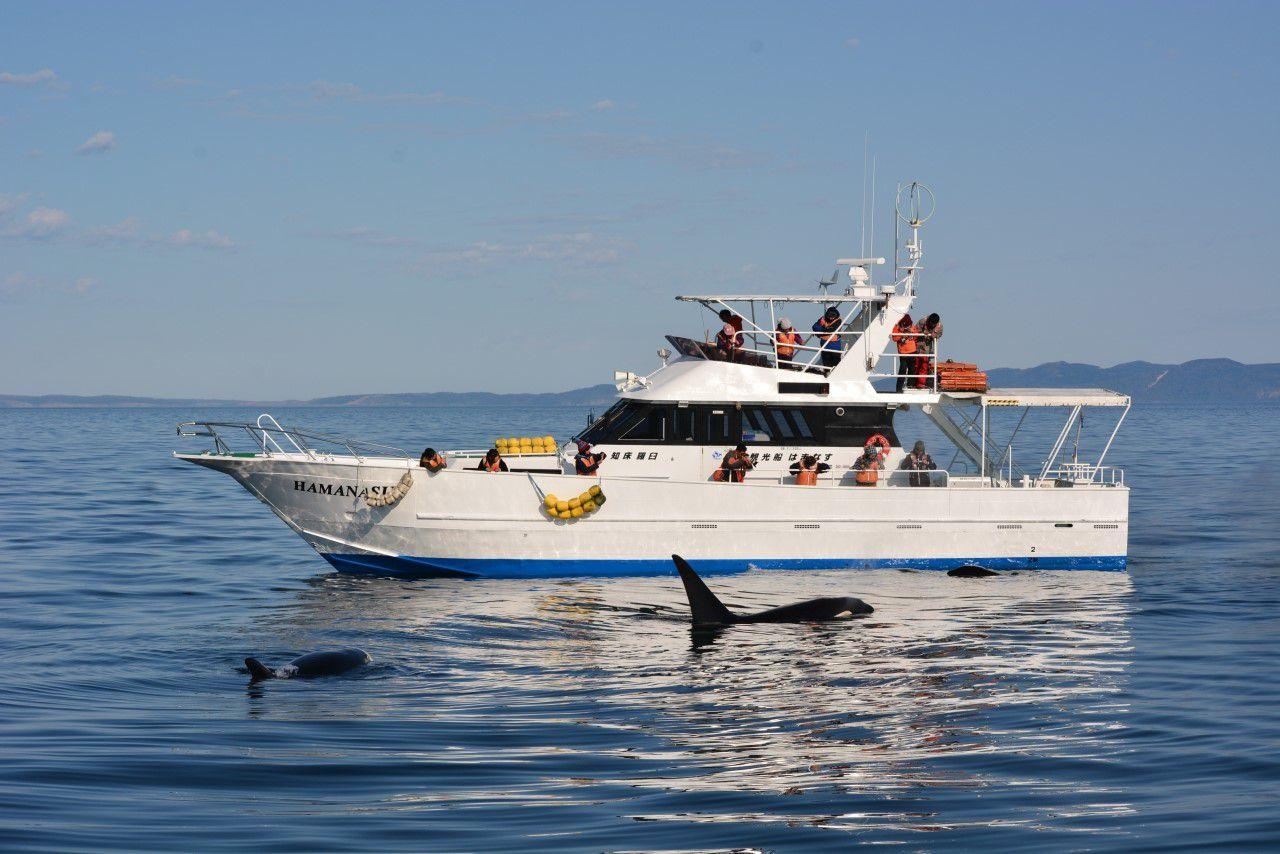 尾田建設株式会社 観光船はまなす